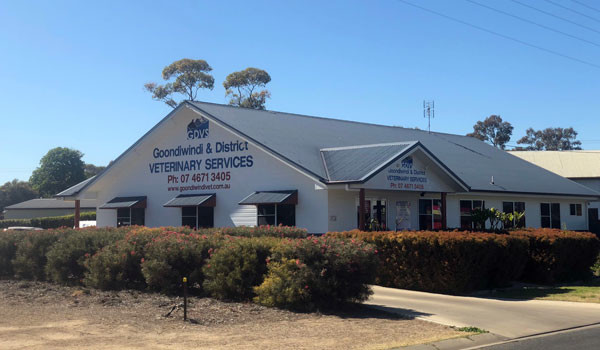GDVS Russell Street - Small Animal Clinic 1
